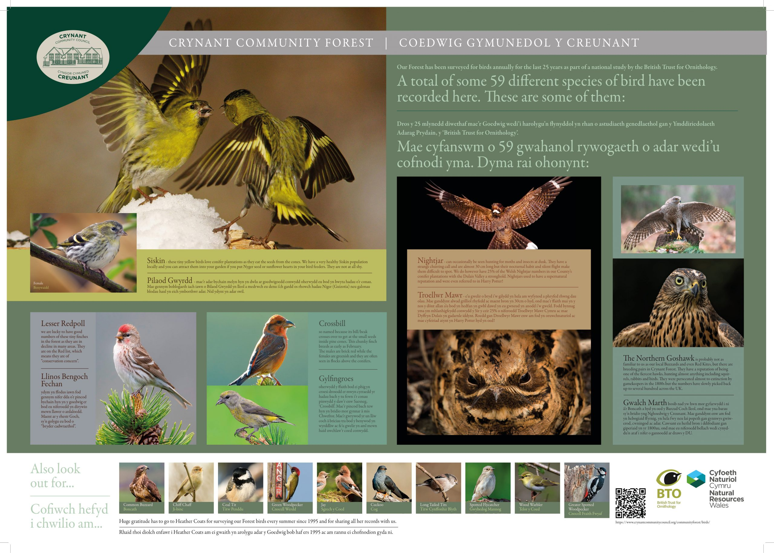 Picture describing the birds found along Forest Walks. Panel has five main blocks depicting male and female varieties of: Siskin males competing with wings outstretched. These are small pointed beaked birds with light yellow chests and brown wings with a yellow horizontal bands. A smaller picture depicts a female on a branch with speckled white chest and two bands of yellow on brown wings; Nightjar in flight with wings outstretched. It is a brown larger bird with white bands at the tip of its wings and bottom of tail feathers. A second picture is a close up of its specked brown face; The Northern Goshawk - two pictures with one hawk standing atop a tree stump, wings open. This is a speckled light brown bird of prey. Second picture shows a close up of the face; Lesser Redpoll - a red head crested smaller bird with pointed orange bead, white banded brown wings and a white chest. Has small splashes of red at cheek areas; Crossbill - an orange and brown bird with larger slight hooked beak. Orange chest and mottled brown wing feathers.