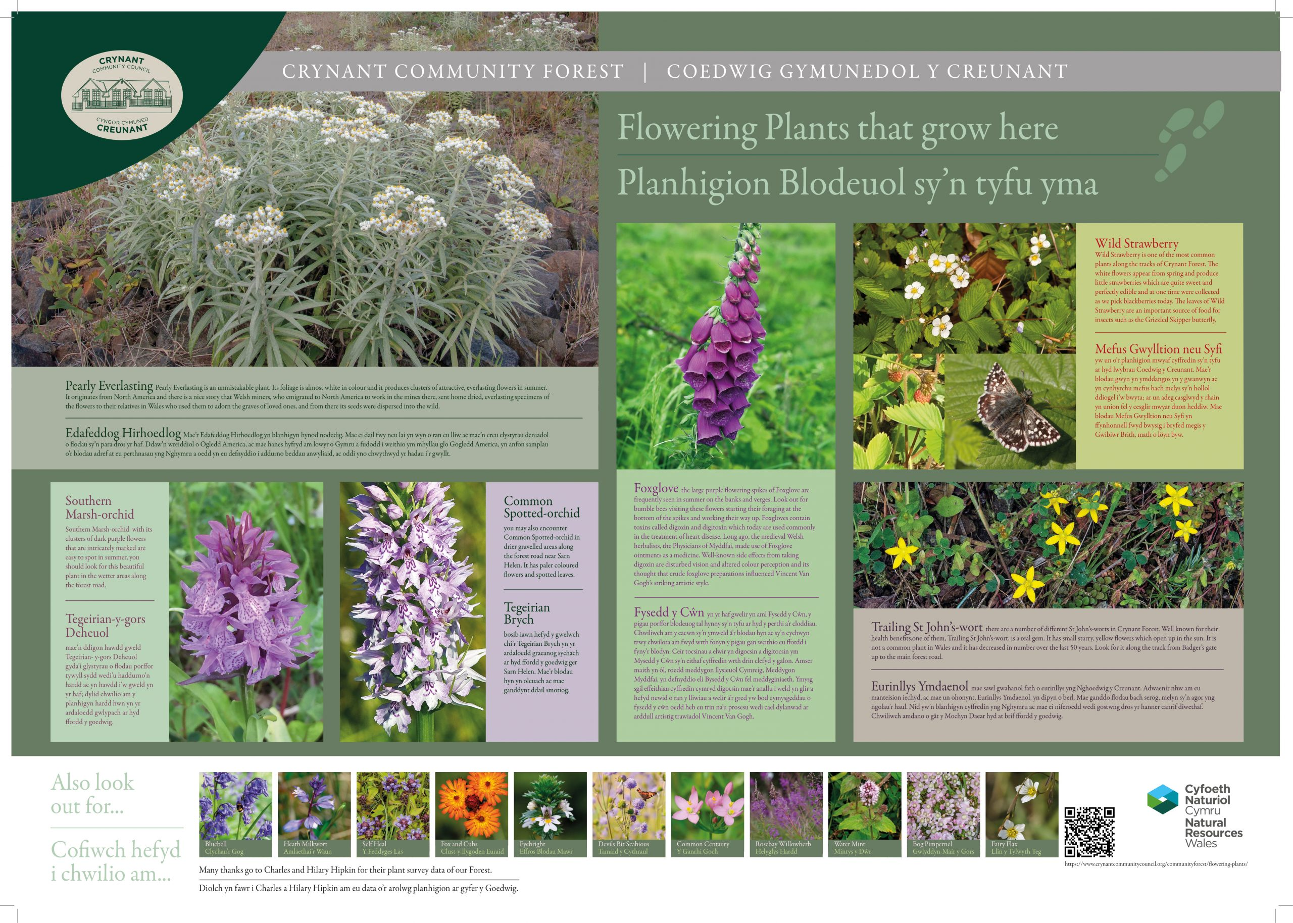 Image showing a selection of flowering plants that grow here. The panel comprises of seven main images: Pearly everlasting - a silvery leafed plant with small white flowers; Southern Marsh Orchid, a bluebell like purple plany with fine spotted orchid flowers; Common Spotted orchid, a taller blue bell like plant in lighter purple with darker finely spotted flowers; Foxglove, a tall plant with bell like purple flowers; wild strawberry plant with small while flowers and accompanying photo of a butterfly; and trailing St John's Wart with smaller star shaped yellow flowers. The panel also lists various other plants that may be found in a bottom row of smaller pictures. These are described in the page text.